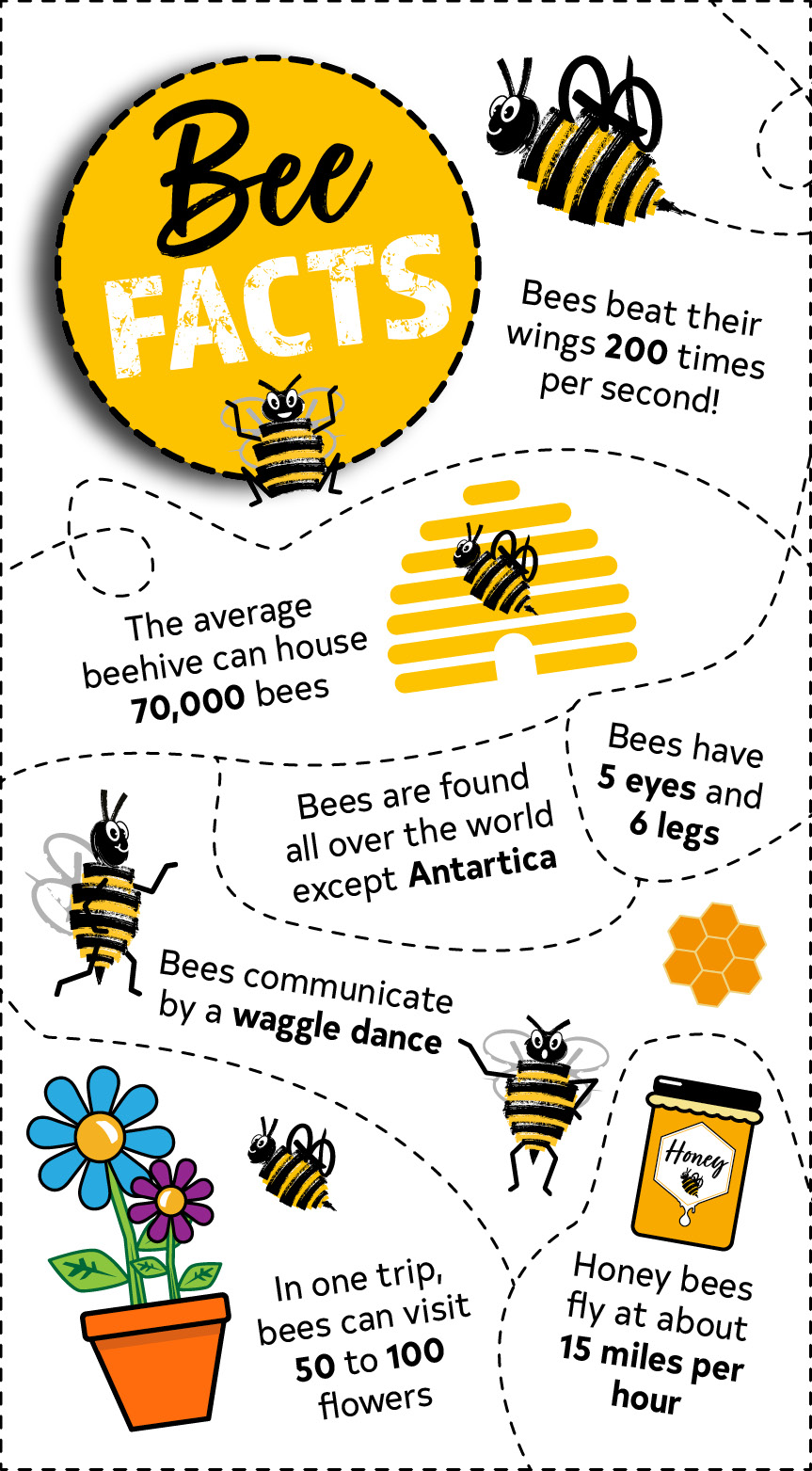 Bee Facts Infographic